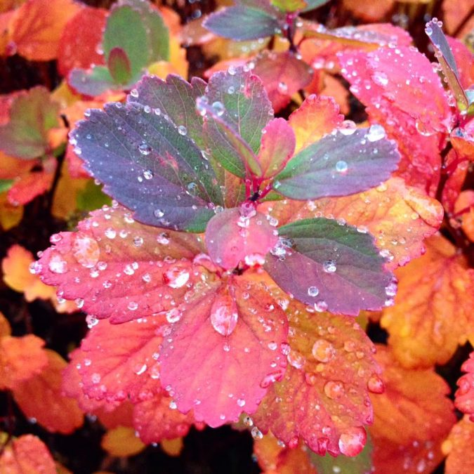 Fall leaves with dew drops
